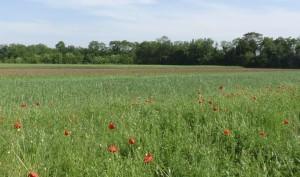 Terreni collettivi a Ciconicco