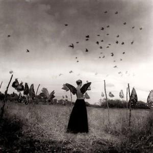 Kusterle - Le ali dei sogni
