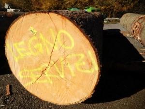 Lotto 1a Asta legname di pregio